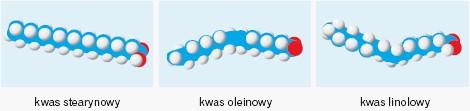 Modele cząstek kwasów