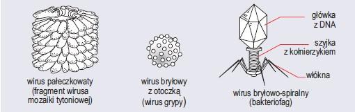 Struktura różnych wirusów