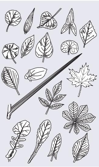 Różne formy liści
