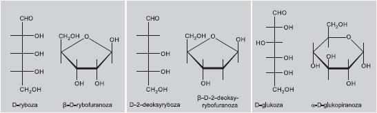 formy łańcuchowe i cykliczne monosacharydów.