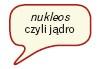 Nukleos czyli jądro