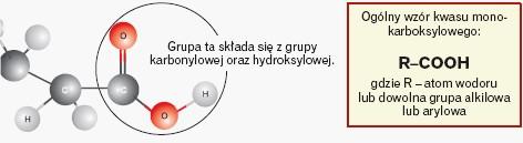 Kwasy monokarboksylowe