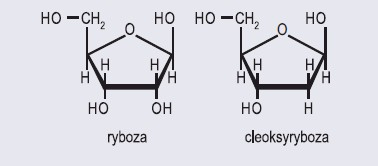 monosacharydy