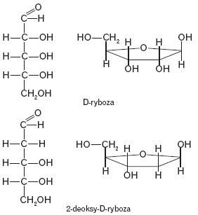 D-ryboza i 2-deoksy-D-ryboza