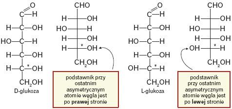 Atomy odniesienia
