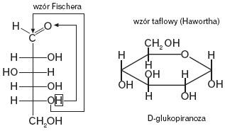 Wzór Fishera i wzór Hawortha