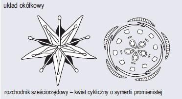 Różnorodność budowy kwiatów (wg Podbielkowski, 1972)