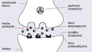 Synapsa chemiczna