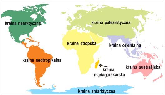 Rozmieszczenie krain zoogeograficznych