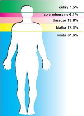 Składniki ciała człowieka