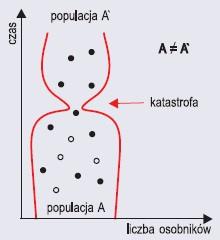 Efekt wąskiego gardła (wg Kowalczyk, Filipska, 2004)
